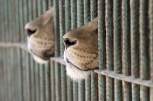 jaula-zoo