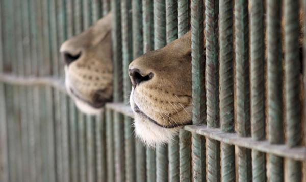 Animales de exhibición